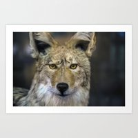 coyote Art Prints featuring Coyote by William Benitez