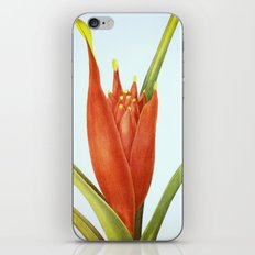 II. Vintage Flowers Botanical Print by Pierre-Joseph Redouté - Tropical iPhone & iPod Skin