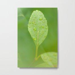 Rainy Green Metal Print