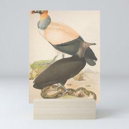 037 sarcoramphus papa peronopterus jota7 Mini Art Print