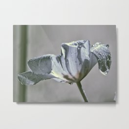 Wet Tulip - Infrared Metal Print