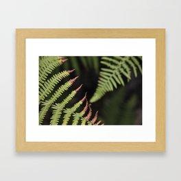 Ferns. Garajonay National Park Framed Art Print