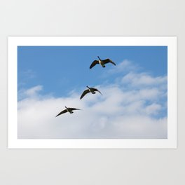 Three Canadian Geese Art Print