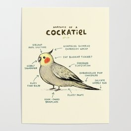 Anatomy of a Cockatiel Poster