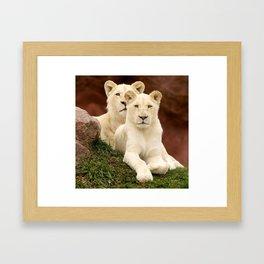 White Lion & Lioness Cubs Framed Art Print