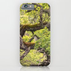 Gnarled iPhone 6s Slim Case