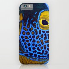 Blue-faced Angelfish iPhone 6s Slim Case