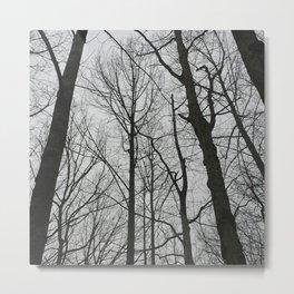 Barren Forest Metal Print