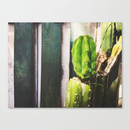green cactus with green and white wood wall background Canvas Print