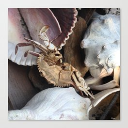 Crabe &Coquillages Canvas Print