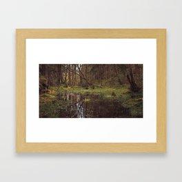Forest Swamp Framed Art Print