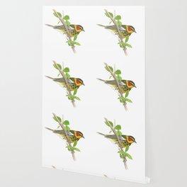 Cape May Warbler Wallpaper