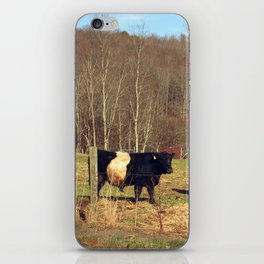 Two Oreo Cows on the Hill, Staring at You iPhone Skin