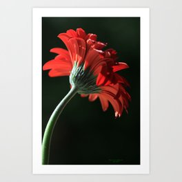 The Red Sun Dancer Art Print