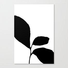 Three Leaf Seedling - Black and White Botanical Canvas Print
