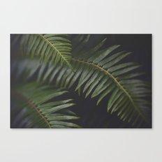 Woodland Ferns Canvas Print