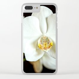 White Phalaenopsis Moth  Orchid Clear iPhone Case