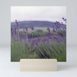 Lavender Fields Forever Mini Art Print