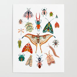 Beetles of the World Poster