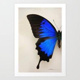 Papillons2 Art Print