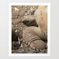 tortoise Art Prints featuring Tortoise by Kamero Designs