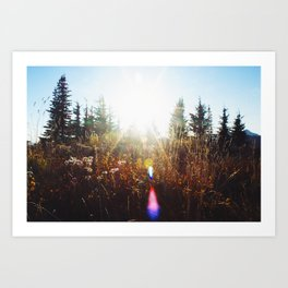 Meadow Flare Art Print