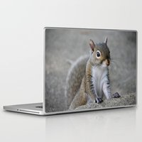 squirrel Laptop & iPad Skins featuring Squirrel by Charlene McCoy