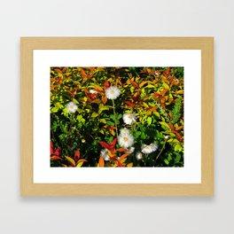 Summer in Canada Framed Art Print