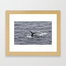 A Whale's Tail 2 Framed Art Print