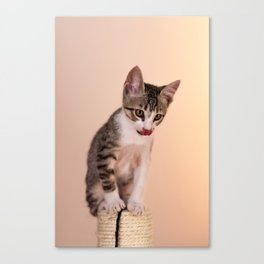 Up Top! Canvas Print