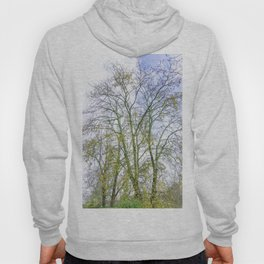 Park with big old trees Hoody