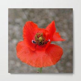 Bright Red Poppy by Teresa Thompson Metal Print