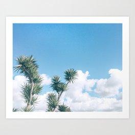 Yucca Sky Art Print