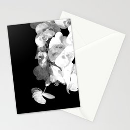 White Orchids Black Background Stationery Cards