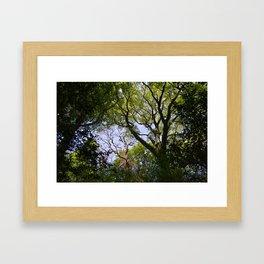 Tree Branches Framed Art Print