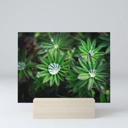 Lupines in Spring 4 Mini Art Print