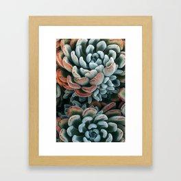 Autumn Succulent #1 Framed Art Print