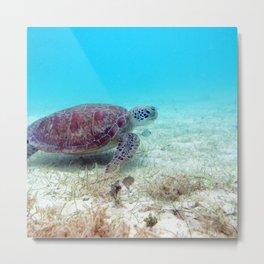 Watercolor Turtle, Green Turtle 43, St John, USVI Metal Print
