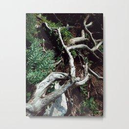 The Root Metal Print