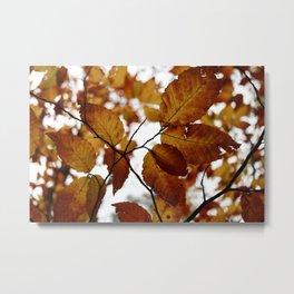 Beech Leaves Metal Print