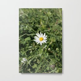 lonely flower, color photograph Metal Print