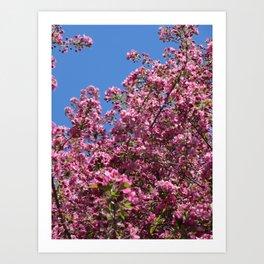 Spring blossoms pink Art Print