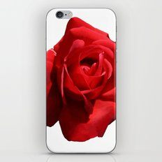 Red Rose Isolated iPhone & iPod Skin