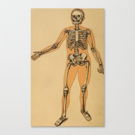 Vintage Human Skeleton Illustration (1887) Canvas Print