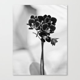 Vegetal Portrait II: Black Orchid Canvas Print