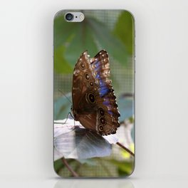 Butterfly Blue iPhone Skin