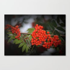 Rote Beeren Canvas Print