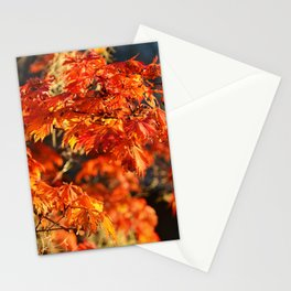 Autumn Colors 5 Stationery Cards