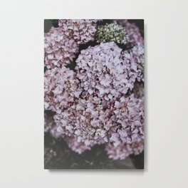 Hydrangeas Metal Print