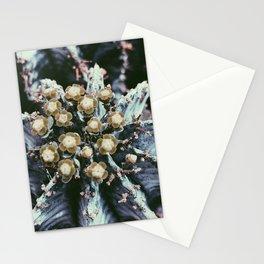 Dry Garden 2 Stationery Cards